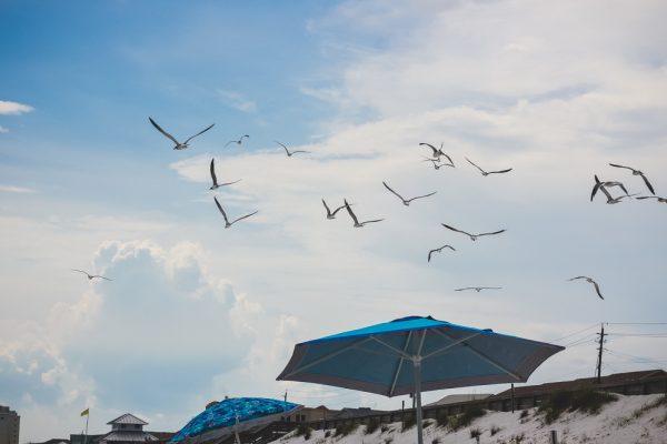 Destiny Beach Birds